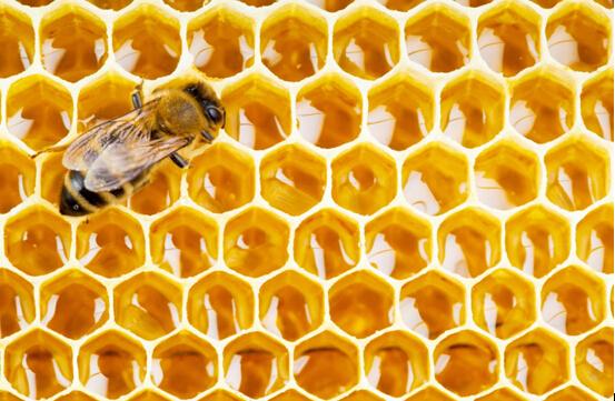 掌控糖尿病-糖尿病人能吃蜂蜜吗配图